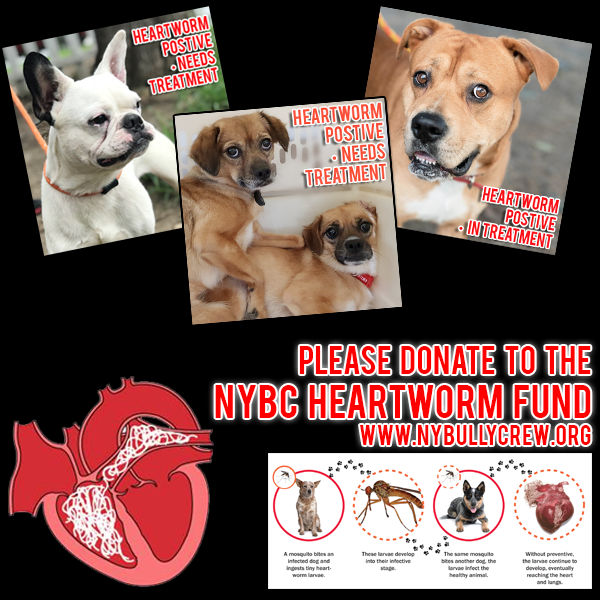heartworm fund