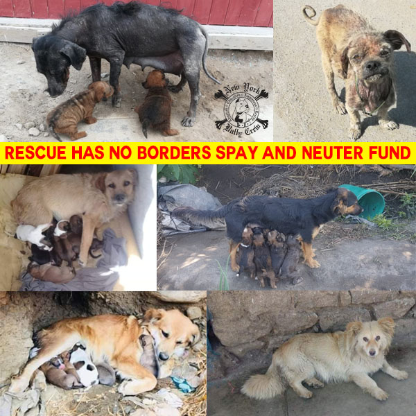 no borders spay fund